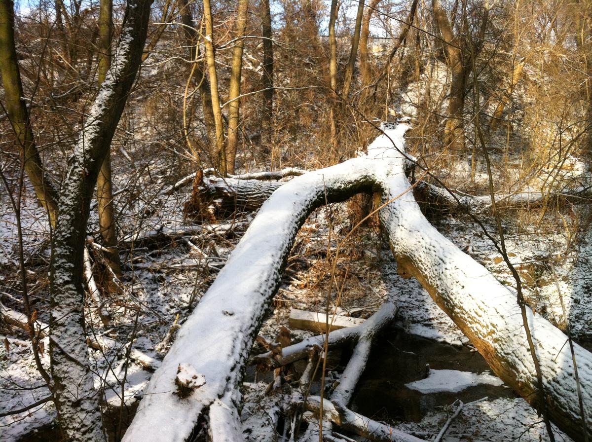 Andriy Ushenko - my forest